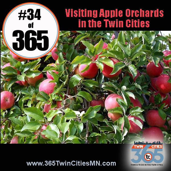 No34of365Apple Orchards